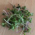Basic Microgreen Salad Mix