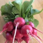 Red Radishes Bunch with Tops